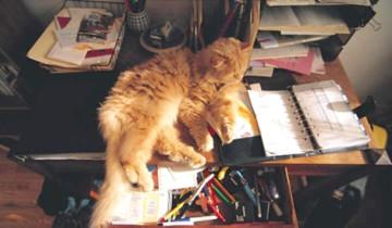 Cat Supplies Kitty Office