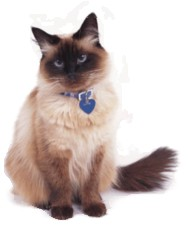 Cat with collar and tags