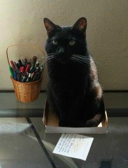 black cat in box on desk