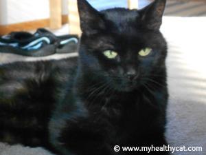 Healthy Cat Xela