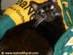 Neko the black cat