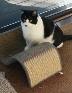 Fancy Cat Scratcher