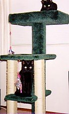 Two black cats on tall green kitty condo