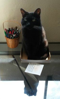 black cat in a box