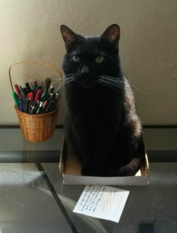 black cat in box on desk