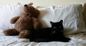 stuffed cat toy and bed