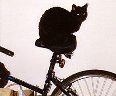 Cat on a bike