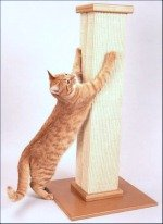 Cat scratching on tall scratching post