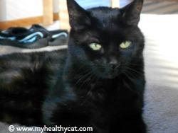 healthy_cat_in_sun