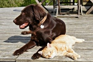 outdoor flea control to protect pets