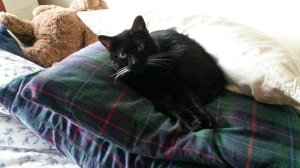 black cat on pillow